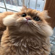 These pretty cats will brighten your day. Cats are fascinating friends. Cute Little Animals, Cute Funny Animals, Funny Cats, Pretty Cats, Beautiful Cats, Fluffy Animals, Animals And Pets, Baby Cats, Cats And Kittens