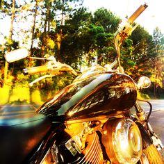 Dragstar 650. Motorcycle. Sunset.