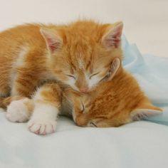 Red kittens