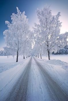 Avenue of frosted trees.