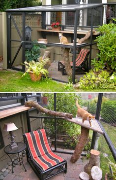 Cat Lovers Are Splashing Out On 'Catios' - Patio Spaces For Indoor Cats Cat Jungle Gym, Outdoor Cat Enclosure, Reptile Enclosure, Cat Run, Outdoor Cats, Buy A Cat, Cat Furniture, Crazy Cats, Pet Birds