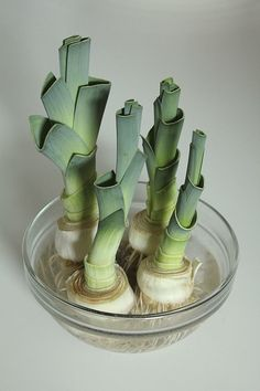 Leeks | Growing Food From Scraps | 37 Kitchen Scraps You Can Regrow