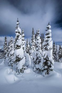 Snow Pines Northern BC | by intrepidphotos