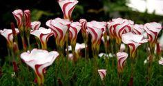 Blog de Jardinería, Plantas y Flores - Huerta Diseño Reciclados