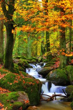 Nature shared by eladvi on We Heart It Beautiful Nature Wallpaper, Beautiful Landscapes, Beautiful Images, Fall Pictures, Nature Pictures, All Nature, Amazing Nature, Natur Wallpaper, Landscape Photography