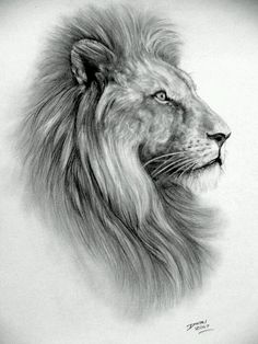 Ink Drawing Lion Design Lion Tattoo Idea Lion Sketch Lions Drawing ...