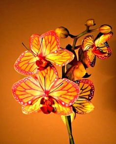 Butterfly Orchid.  ♥  ♥ ✿ Ophelia Ryan✿♥