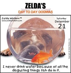 Zelda's Day-To-Day Dogmas 12-21-13