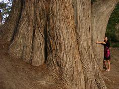 Girl hugging the biggest tree in Texas! (Cypress tree)