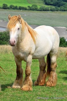 2 yr stallion