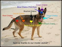 Resultado de imagen para chakras en los perros