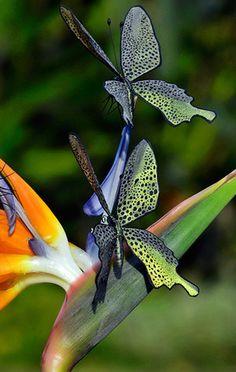 Rare Rihanna Butterflies