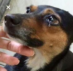 Eles têm sentimentos... Planeta Animal, My Love, Dogs, Animals, Feelings, Animales, Animaux, Pet Dogs, Doggies