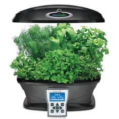 The Intelligent Indoor Garden System - Hammacher Schlemmer i might actually not kill plants with this.