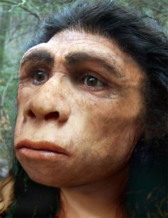 Extinct human species - Homo Erectus