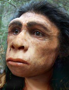 Extinct human species - Homo Erectus