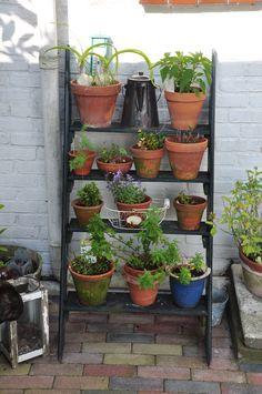 Keldertrapje met brocante en plantjes