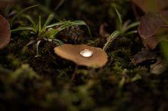 Jewel by Masaru Kuroda on 500px