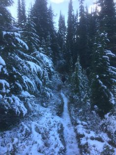 Space Cowboy's 2016 Pacific Crest Trail Photos : Walking in a Winterwonderland Literally