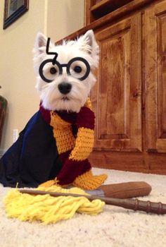 (via Harry Potter inspired Gryffindor House dog Scarf by Gothicbeagle).