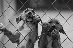 Politia animalelor si departamentul antifrauda. Sunt cele doua compartimente care vor lua fiinta in curand in cadrul Directiilor Sanitar-Veterinare din Romania. Prezent la Oradea, presedintele Autoritatii spune ca prin crearea acestor structuri se incearca eliminarea fraudelor si imbunatatirea sanatatii populatiei si animalelor.