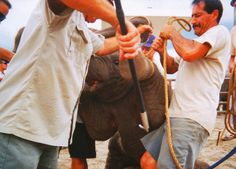 Speak up TODAY and urge Ringling to end its cruel elephant acts IMMEDIATELY.