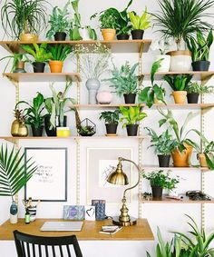 That @Dabito sure knows how to rock #jungalowstyle !!! Talk about a vertical garden...