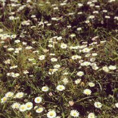 Tracce di primavera.