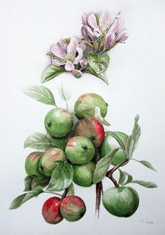 apples_appleblossom by Nicola Cavalla, via Flickr