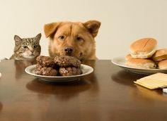 пищевая аллергия у собак симптомы