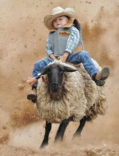 """"""" And another cowboy was born.Justin and I watched this at the rodeo last year, those kids were fearless:) Little Cowboy, Cowboy Up, Cowboy And Cowgirl, Farm Animals, Cute Animals, Paint Horse, Rodeo Life, Bull Riding, Country Girls"""