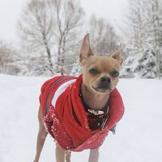 J'en connais un qui n'aime pas l'hiver!