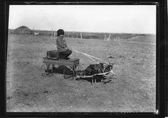 Manor, SK, circa 1915: Gene Craig in a wagon, pulled by turkeys | saskhistoryonline.ca