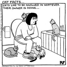 Cat Facts- On the Prowl Cat Cartoons (Robert Fawcett) Crazy Cat Lady, Crazy Cats, Funny Cartoons, Funny Cats, Cats And Cucumbers, Cat Jokes, Cat Comics, Cat People, Cat Facts