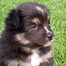 Eidalun Kennel - Koiramme