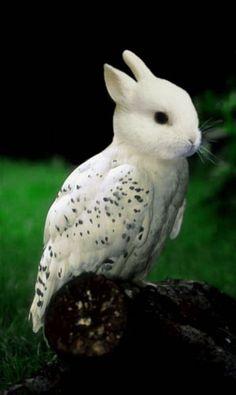 photoshop pics of animals | Weird Photoshopped Animals