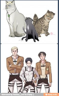 Erwin, Levi and Eren as cats. I'm sorry but Levi is just so sassy in the second picture! XD