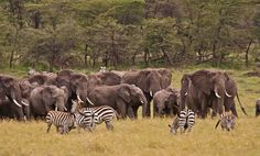 Kenia Elephant, Africa, Animals, Kenya, Animales, Animaux, Elephants, Animal, Animais