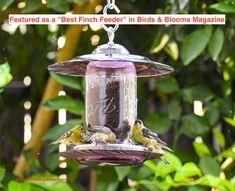 #homeliving #outdoorgardening #feedersbirdhouses #hangingbirdfeeder #birdbath #glassmasonjar #amethyst #giftforwife #easytohang #giftforher #songbirds #finchfeeder #birdfeeder #hummingbirdfeeder #birdhouse #gardengift #hangingbirdfeeder #handmade #glassmasonjar #feedingbirds #giftforwife #cottagecore #outdoors #birdhouse #easytohang #birds Wood Bird Feeder, Bird Seed Feeders, Hanging Bird Feeders, How To Attract Birds, How To Attract Hummingbirds, Niger Seed, Finch Feeders, Yellow Finch, Thistle Seed