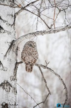 Funny Animal Photos, Cute Animal Pictures, Owl Bird, Pet Birds, Animals And Pets, Cute Animals, Animal Intelligence, Snow Pictures, Beautiful Owl