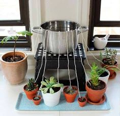 Going away? Keep your plants wet: a bowl with plenty of water, placing one end…