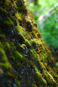 mossy tree macro - Hľadať Googlom Country Roads, Australia