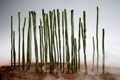 Bosque-de-bambu. exprimental. elBulli 2007 Ferran Adria