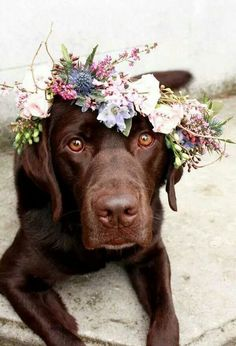Spring boho inspired wedding featuring the couples sweet chocolate lab.