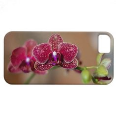 Beautiful Red Orchid iPhone 5 Case