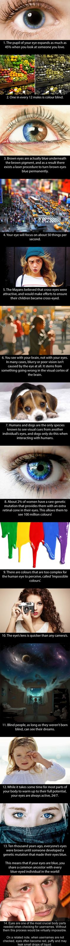 13 incredible facts about your eyes - (life tips mind blown) The More You Know, Good To Know, Did You Know, Wtf Fun Facts, Random Facts, Crazy Facts, Cool Facts, Random Stuff, Awesome Facts