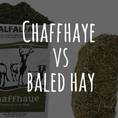 12 Best Chaffhaye images in 2016 | Goat, Homesteading