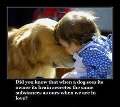doggie love