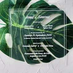 INVITATII SPECIALE Oras, Plant Leaves, Plants, Plant, Planets