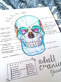 Medical Anatomy Study Guides Tips 19 Ideas Nursing School Notes, Medical School, Science Notes, Science Ideas, Science Projects, Life Science, Medical Anatomy, Anatomy Study, Pretty Notes